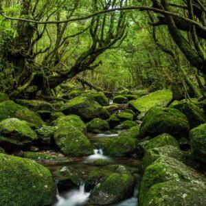 مجموعه آواها و صدا های طبیعت Echoes Of Nature